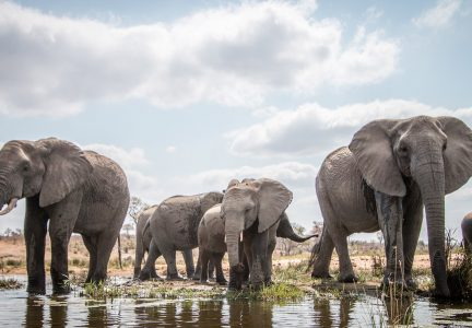 Trump: Killing Endangered Elephants for Sport and Ivory is OK